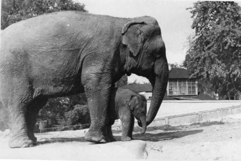 a history of zoos