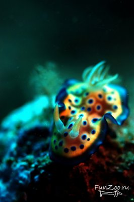 1243426334_nudibranch.jpg